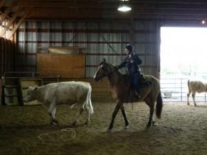 horses 011