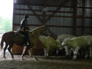 horses 016